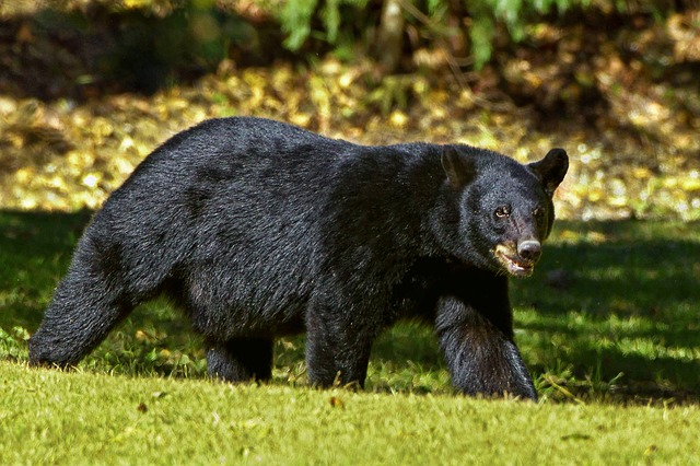 What animals live in Canada's boreal forest?
